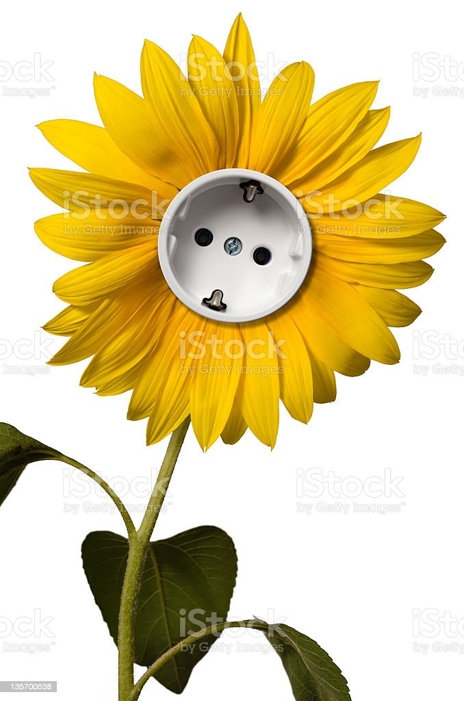Sunflower with socket stock photo