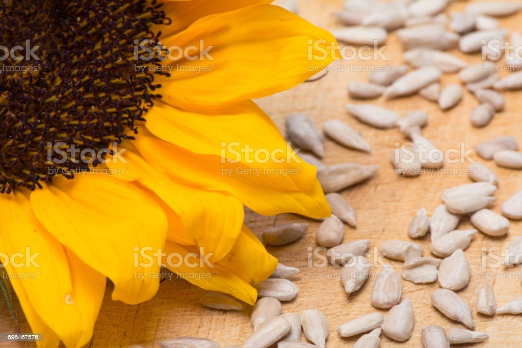 Sunflower with Sunflower Seeds stock photo