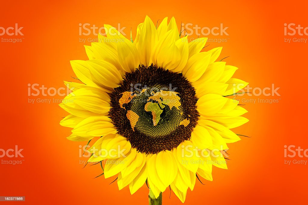Sunflower World Map stock photo