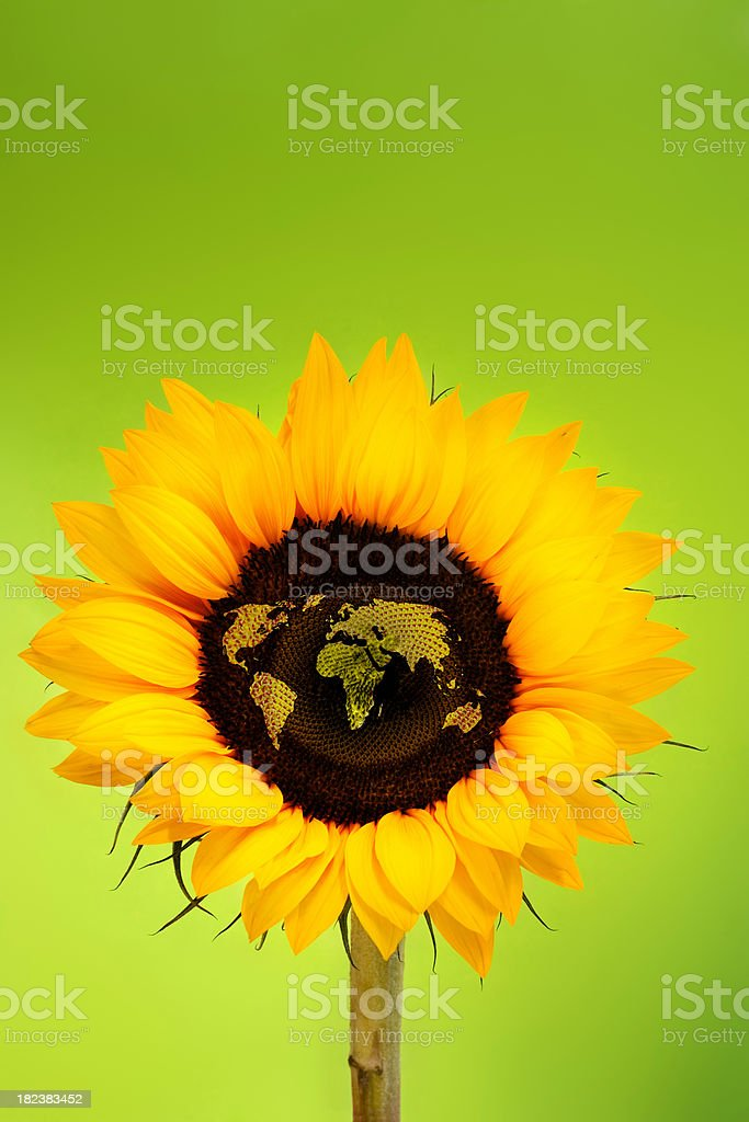 Sunflower World Map royalty-free stock photo
