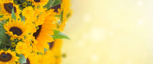 sunflowers anc marigold flowers garden stock photo