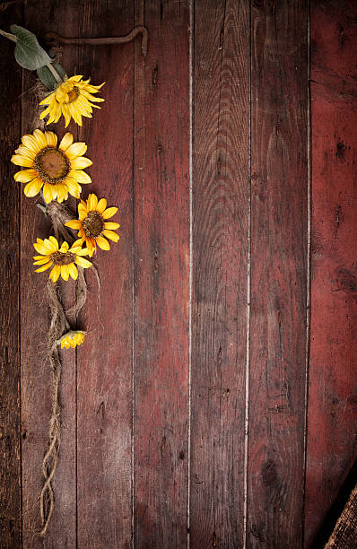 Best Sunflower Background Stock Photos Pictures Amp Royalty