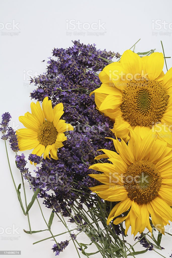 Sunflowers and Lavender royalty-free stock photo