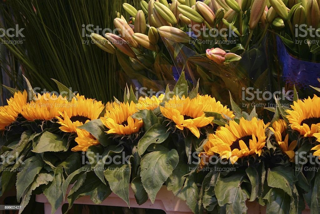 Sunflowers and Lily's royalty free stockfoto