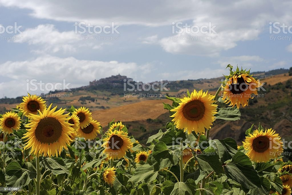 Sunflowers and little village stock photo