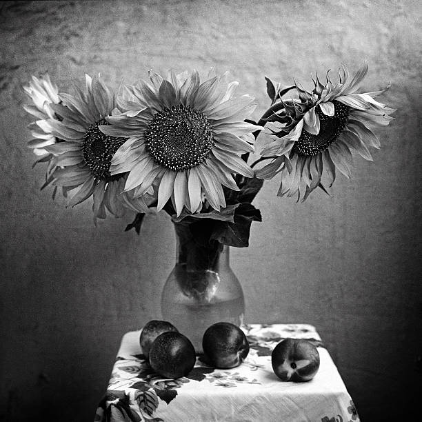 Sunflowers And Nectarines Stock Photo Mexican Sunflower In Black White Background