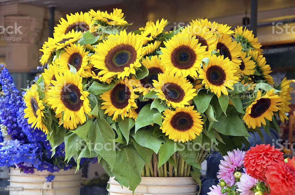 Sunflowers at market royalty-free stock photo