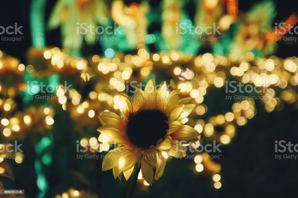 Sunflowers At Night With Light Stock Photo Download Image Now Istock