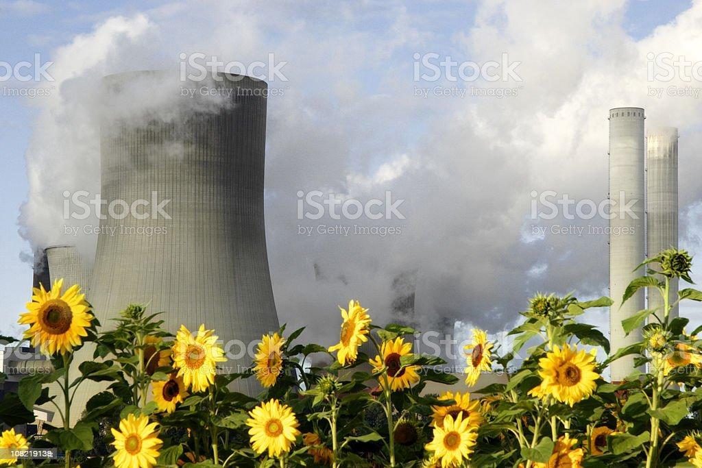 Sunflowers Beside Smokestacks royalty-free stock photo