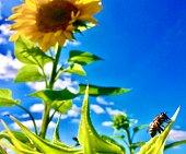 in the garden - san diego, ca