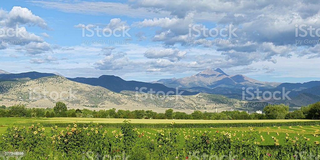 Sunflowers Fields in Hygiene Colorado stock photo