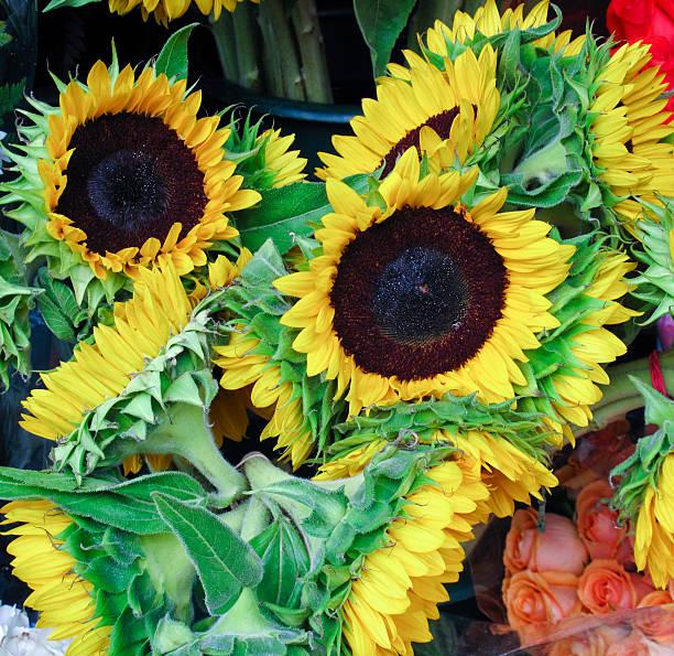 Sunflowers for sale stok fotoğrafı