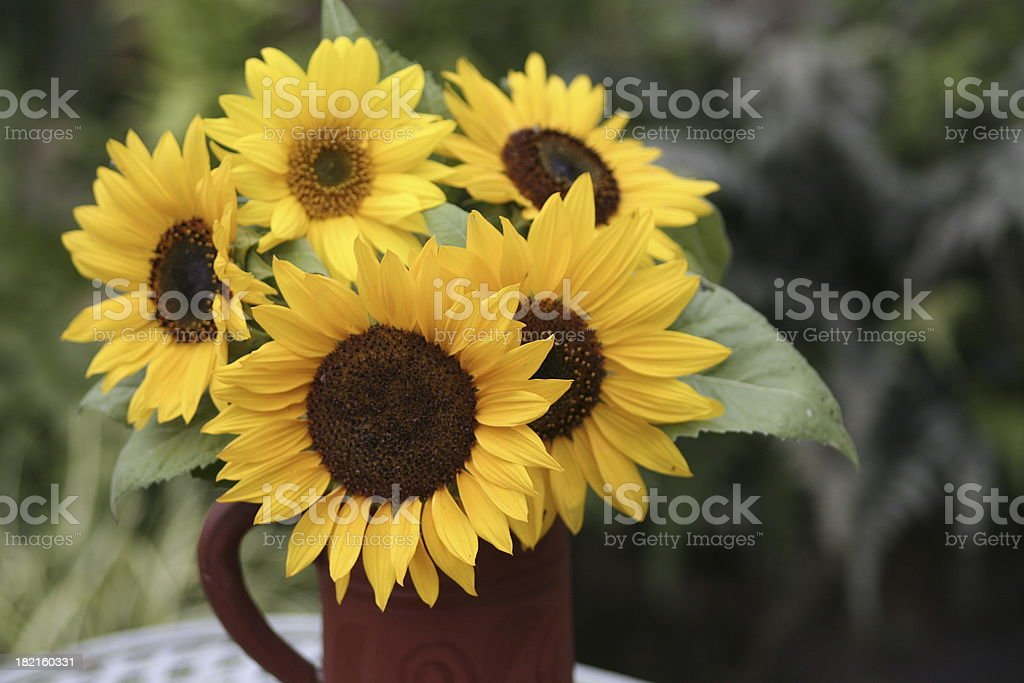 Sunflowers in a vase royalty-free stock photo