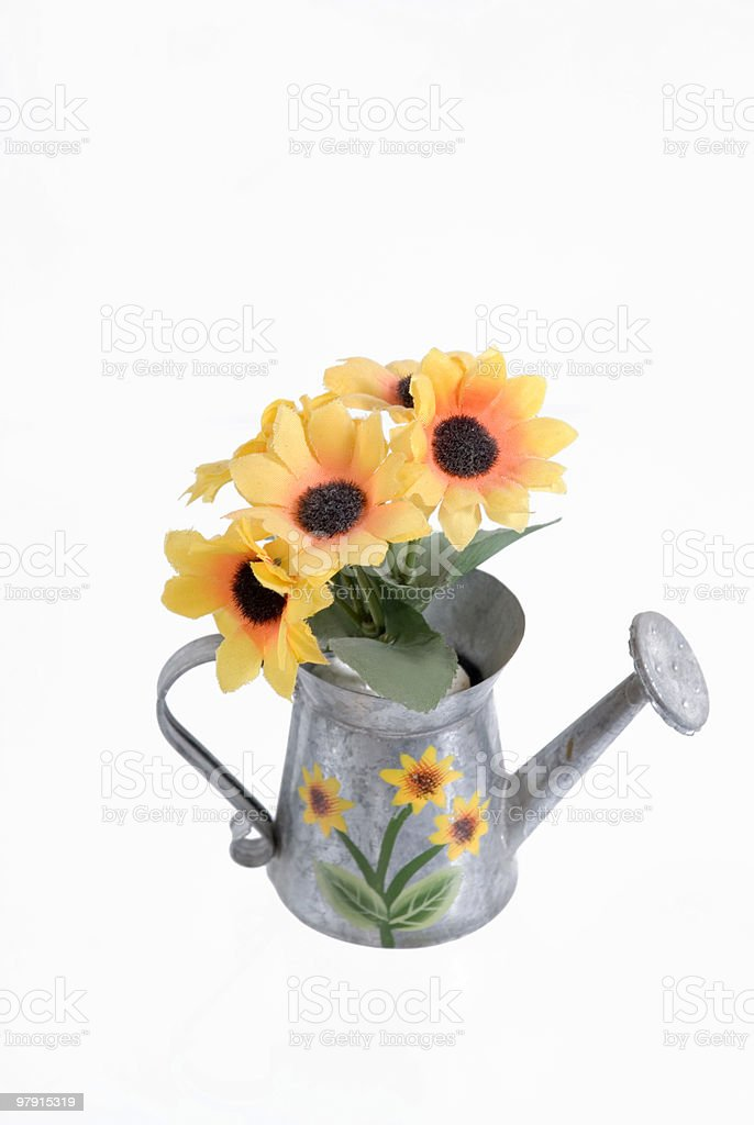 Sunflowers in a watering can royalty-free stock photo