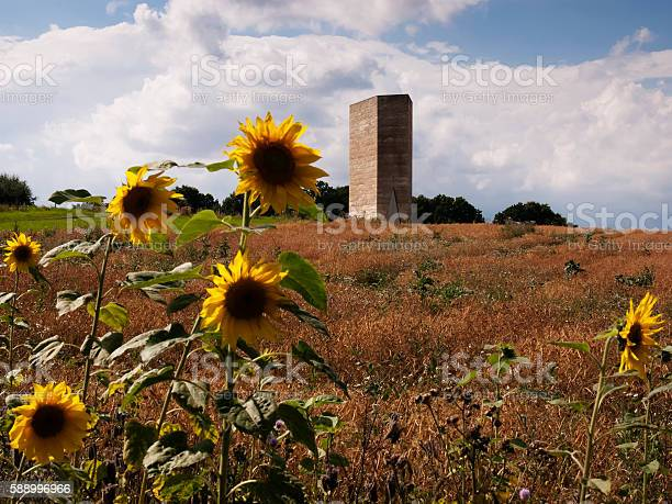 Landscape color image of sunflowers in front of Bruder Klaus field - chapel in Eifel national park near Satzvey in front of blue sky with clouds. Germany, July 2016