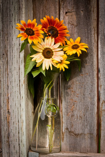 sunflowers in glass carafe stock photo