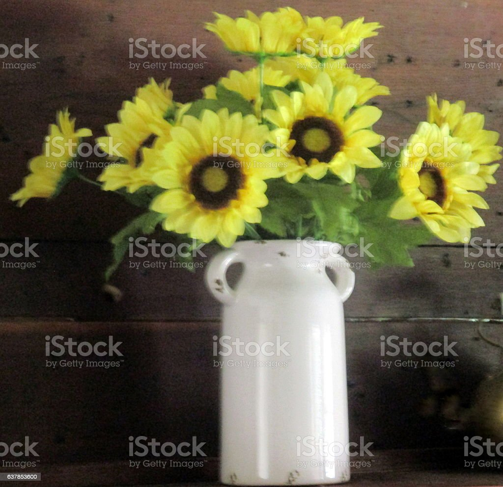 Sunflowers in White Crock Against Rustic Wooden Wall stock photo