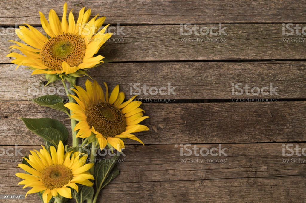 Sunflowers On The Old Wooden Background Space For Text Royalty Free Stock Photo