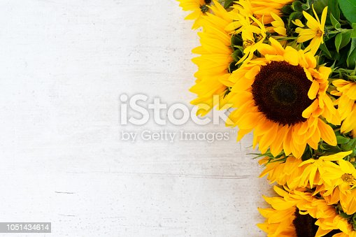 Sunflowers fresh flowers border on white wooden table background