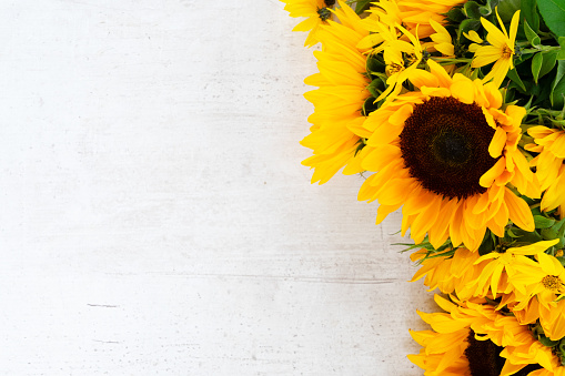 Bright yellow sunflower against a blue sky with clouds, beautiful summer Wallpaper
