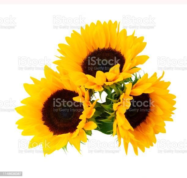 Sunflowers on white picture id1148636387?b=1&k=6&m=1148636387&s=612x612&h=cgiy58rr0dopn4x gxhdqqkpweaqz50yaq2rsz5yoqa=