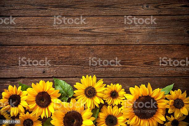 Sunflowers on wooden background picture id599141492?b=1&k=6&m=599141492&s=612x612&h=6nbsxbiojpzrae6q4dnfdehooj 49cnu2nbn2dp3ra8=