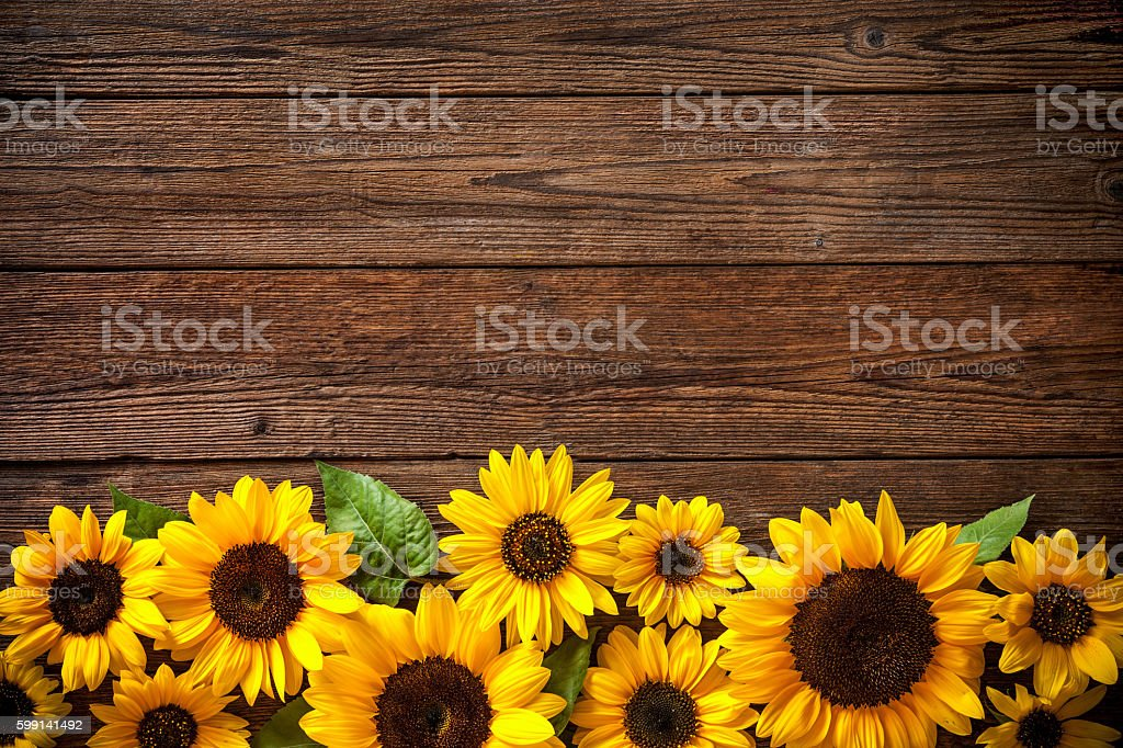 Sonnenblumen auf hölzernen Hintergrund – Foto