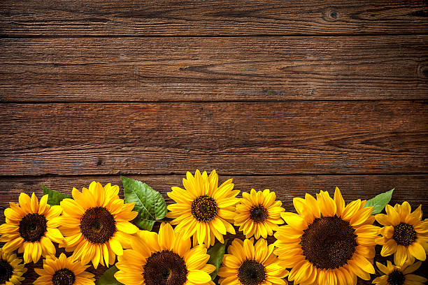 sunflowers on wooden background - sunflower stok fotoğraflar ve resimler
