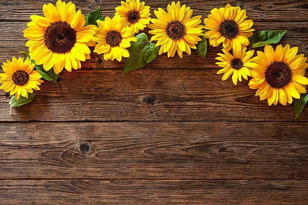Sunflowers On Wooden Background Stock Photo