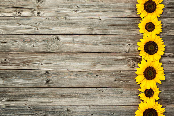 Sunflowers On Wooden Board Stock Photo