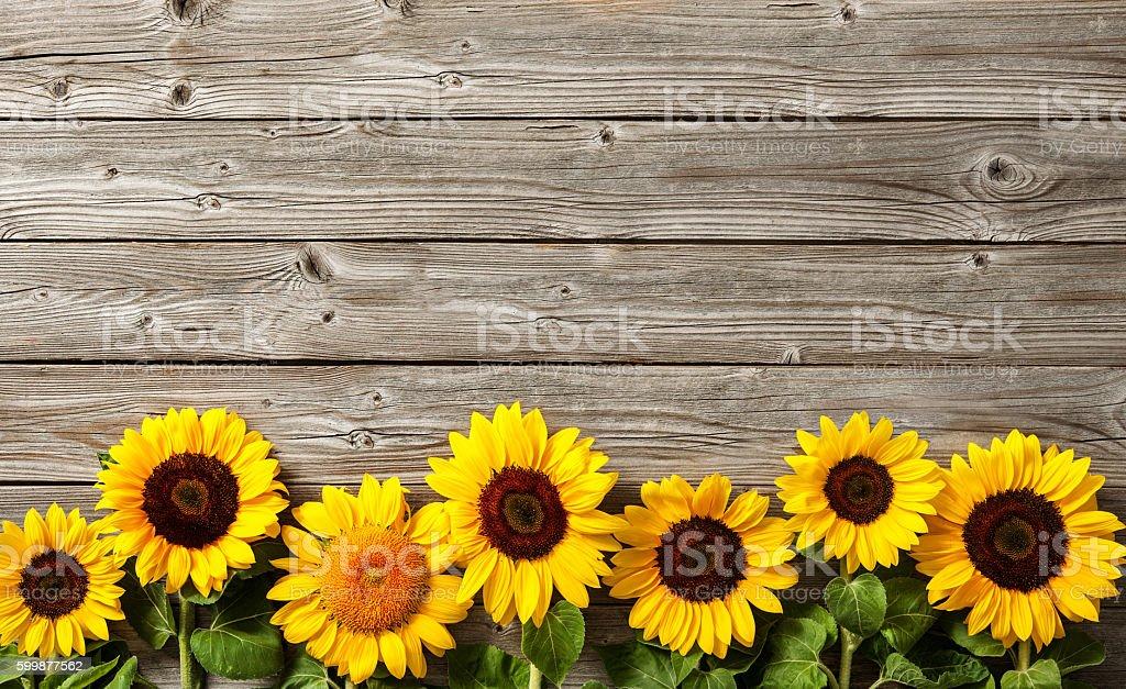 sunflowers on wooden board stock photo