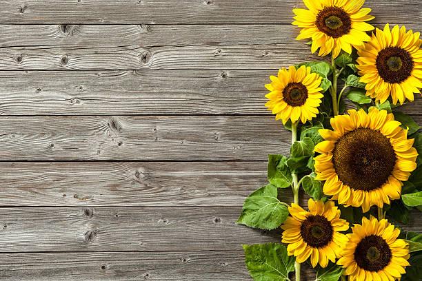 sunflowers on wooden board - sonnenblume stock-fotos und bilder