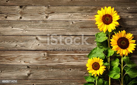 istock sunflowers on wooden board 695971474