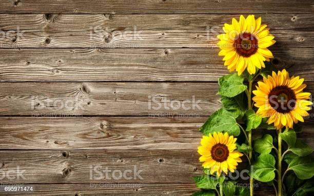 Sunflowers on wooden board picture id695971474?b=1&k=6&m=695971474&s=612x612&h=xnxj uzxdms kera7td80oruue wlk2q62m2iff5avg=
