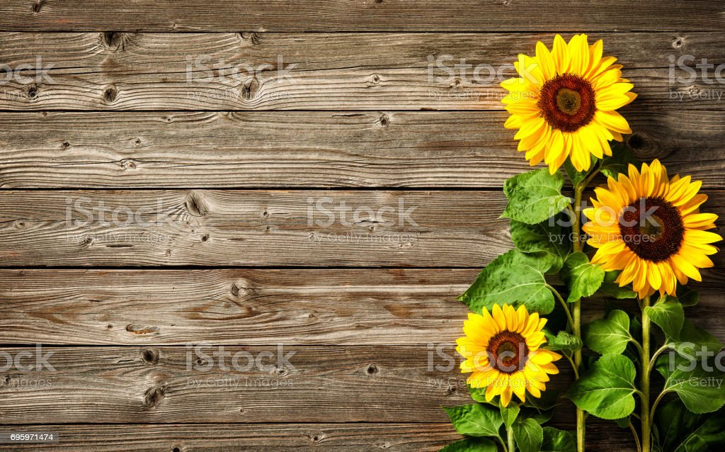 royalty free thanksgiving fall background with vibrant flower border against rustic wood