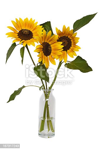 Sunflowers in vase isolated on white.