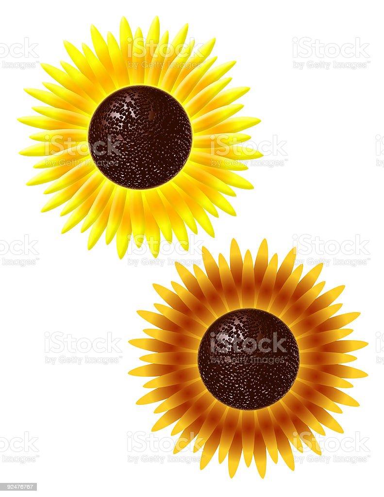 Sonnenblumen Lizenzfreies stock-foto