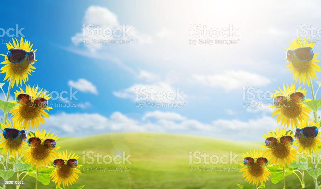 sunflowers with sunglasses in the green grass field on the sun bright sky and cloud background,concept summer background. royalty-free stock photo