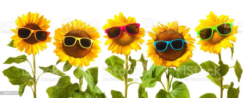 Sunflowers with sunglasses stock photo