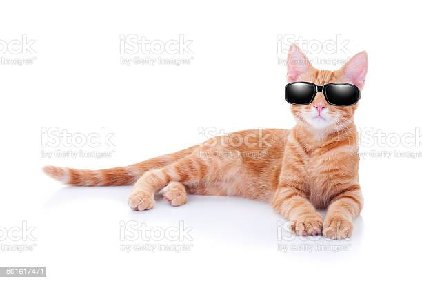 Sunglasses cat picture id501617471?b=1&k=6&m=501617471&s=612x612&h=mj6bodzb7ntwuqkilnaybmtbic2a21depzg5tzatqko=