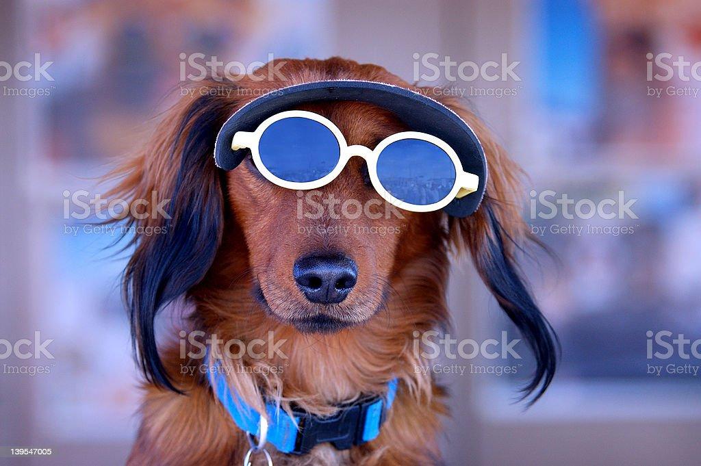 Sunglasses Puppy Dog royalty-free stock photo