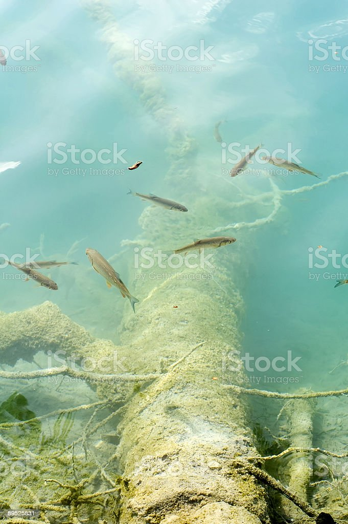 sunk trees royalty-free stock photo
