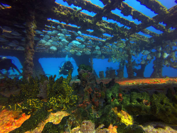 barco hundido - artificial reef stock pictures, royalty-free photos & images