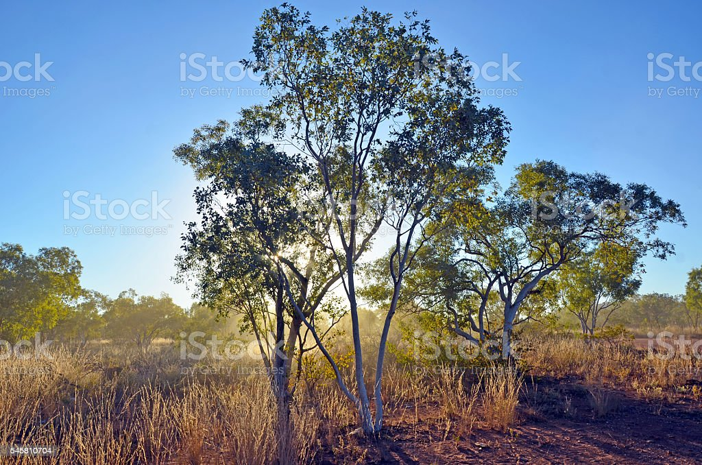 Sunlight and dust in the outback Australian bush stock photo