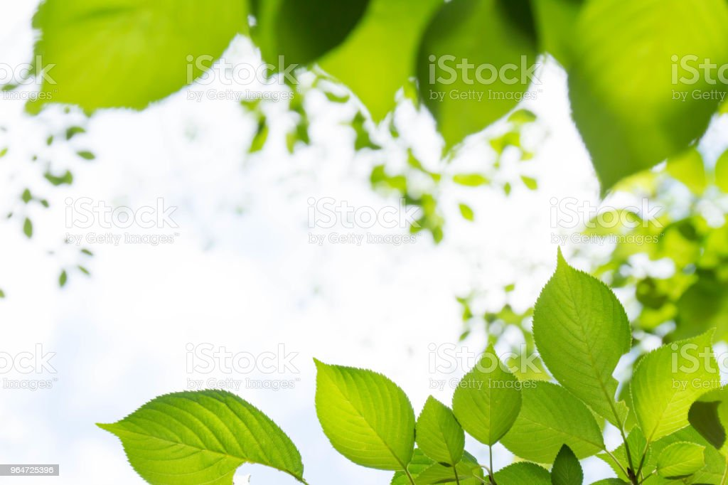 Sunlight and light falling on the fresh green leaves royalty-free stock photo