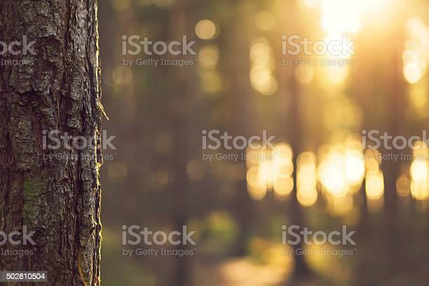 Photo of Sunlight bokeh through Trees in Evergreen forest - UK