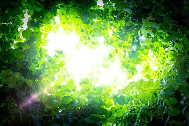 Sunlight breaks through the leaves stock photo