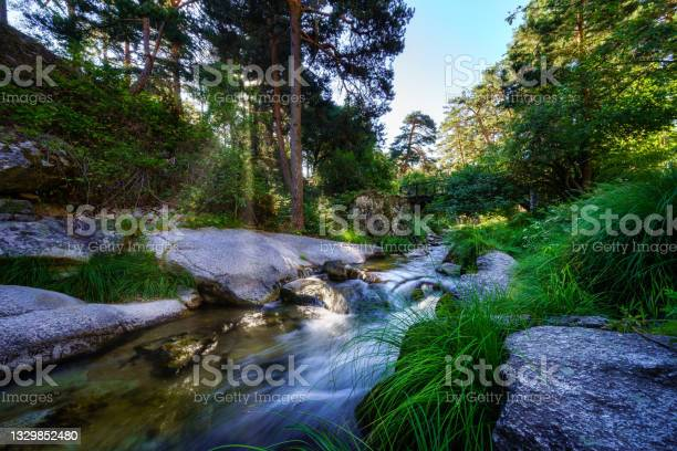 Photo of Sunlight coming through the trees and illuminating the river water. Navacerrada.