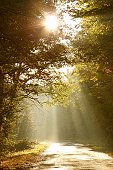 First rays of the rising sun falls on the country road leading through the misty autumnal forest.