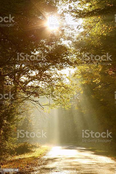 Photo of Sunlight falls on the country road